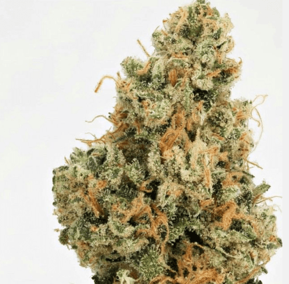 4 Kings Cannabis Seeds by Massive Creations