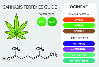 cannabis terpenes chart of ocimene, showing best vaporisation temperatures, flavour profile and health benefits,