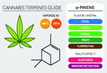 cannabis terpenes chart of a pinene showing best vaporisation temperatures, flavour profile and health benefits,