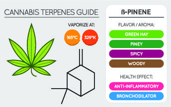 cannabis terpenes chart of b pinene, showing best vaporisation temperatures, flavour profile and health benefits,